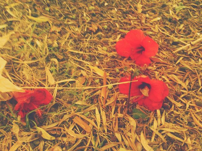 Flower Porn Nature_collection EyeEm Nature Lover Relaxing Taking Photos Check This Out Hello World Italy Sicily Autumn Colours