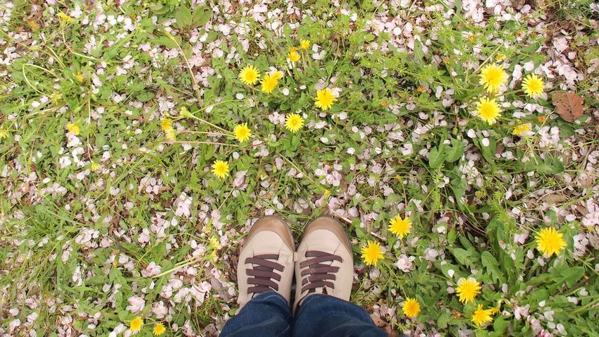 Low Section Flower Human Leg Human Body Part One Person Standing Shoe Human Foot Yellow Nature Personal Perspective Day Leaf Lifestyles Outdoors Plant Real People Beauty In Nature Adult Autumn Sakura Dandelion EyeEmNewHere Beauty In Nature Petal