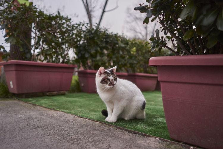 Cat sitting in yard