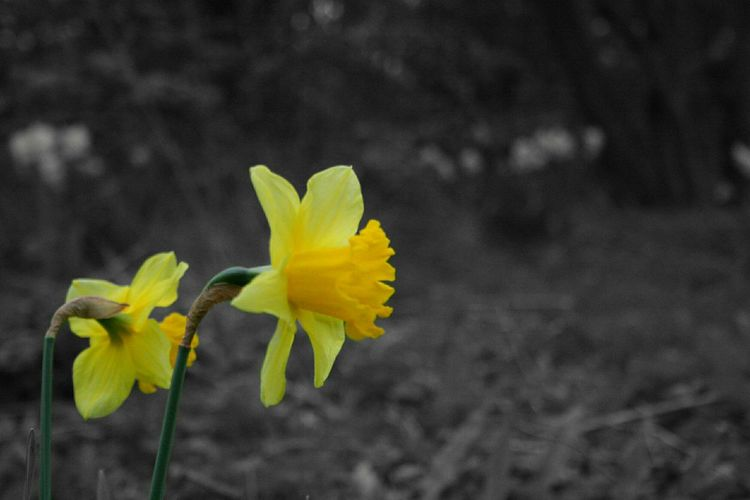 Flower Yellow Leaf Flower Head Springtime Close-up No People Plant Nature Outdoors Fragility Beauty In Nature Day Freshness Break The Mold TCPM EyeEmNewHere Art Is Everywhere Grass Woods Forest The Secret Spaces EyeEm Diversity Cut And Paste The Great Outdoors - 2017 EyeEm Awards
