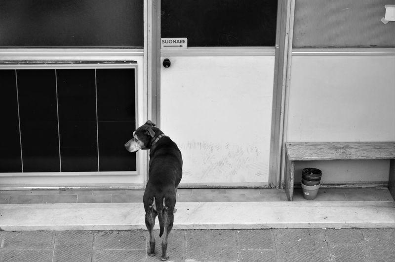 Rear view of dog standing against door