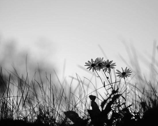 Good morning ☕️ Good Morning! Godmorgon Taking Photos Monochrome Kungshamn Svartvitt Blackandwhite Blommor Flowers XF90mm