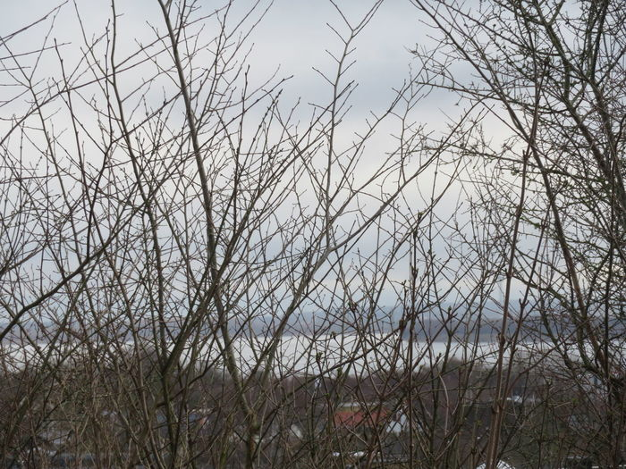 Tree Branch Bare Tree Backgrounds Sky