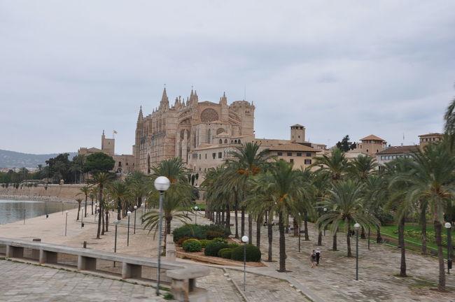 Architecture Built Structure Cathedral Church Mallorca No People Palm Palm Tree Palma Palma De Mallorca Palmen Travel Travel Destination