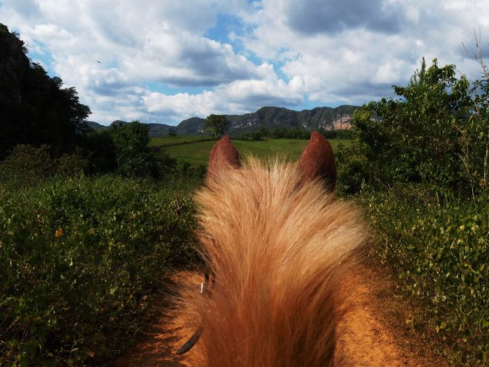 Cloud - Sky Sky Plant Nature Landscape Environment No People Grass Land Scenics - Nature One Animal Day Mammal Rural Scene Growth Green Color Field Beauty In Nature Animal Themes Animal Horse Horseback Horseback Riding Wild Freedom