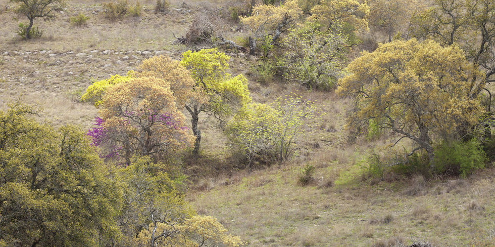 Hillside in the Texas Hill Country with colorful trees Green Pink Texas Beauty In Nature Color Image Colorful Hill Country Hillside Landscape Nature No People Outdoors Photography Rocks Spring Tree Yellow