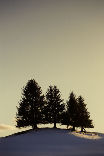 Silhouette trees on snowy field against sky during winter