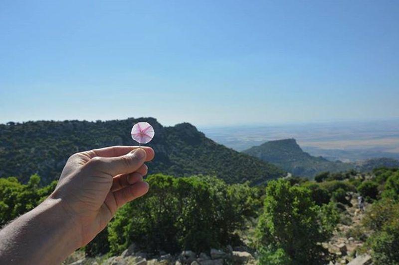 Flower Tunisia IgersTunisia Mountain Wikilovesearth Wikimediatn صباح النوار ... من قمم جبل زغوان :)