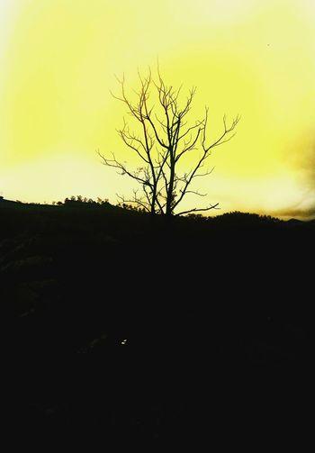LIGHT OFF Tree
