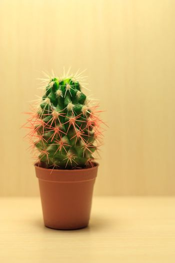 Green cactus with white and red needles on a beige background in a brown pot