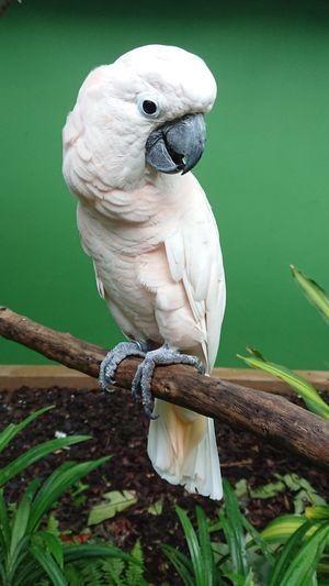 Perching Owl Bird Of Prey Parrot Archipelago Full Length Close-up