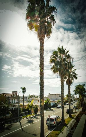 Palm Lined Street Palm Trees Street Automobile Cars Cloudy Sky Neighbourhood Surf City USA Balcony Eyeem Market EyeEm Best Shots EyeEm IShootFromMyWheelchair