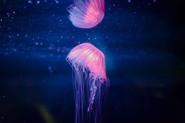 Aquarium Aquatic Jellyfish Multi Colored Reflection Sea Life UnderSea