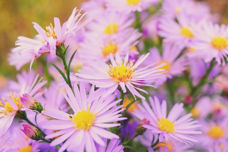 Flowers Flower Collection Violet Colorful Nature Autumn Colors Taking Photos EyeEm Best Shots Pictureoftheday