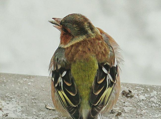 Birds EyeEm Bird Lover  Eyem Nature Lovers  Snowy Days... Hungry Birds