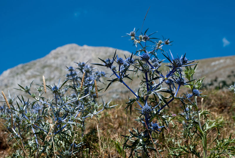 Thistle... Cardo Ciel Clouds Cows Landscape Mountain Mucche Nature Outdoors Sky Thistle Velino Sirente