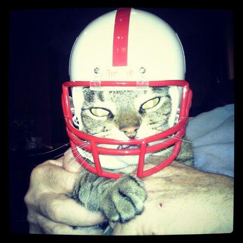 Go Big Red Kitty GoBigRed Huskers