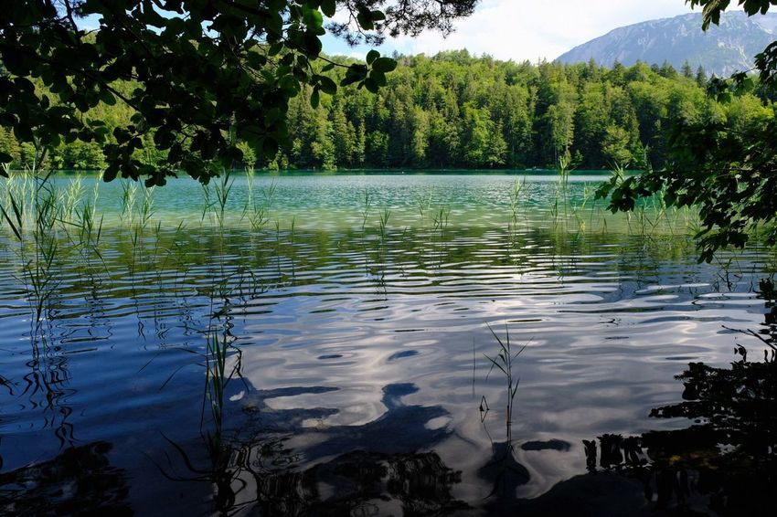 Bavaria Alatsee Water Tree Plant Tranquility Lake Tranquil Scene Scenics - Nature Green Color Reflection Idyllic Waterfront Nature