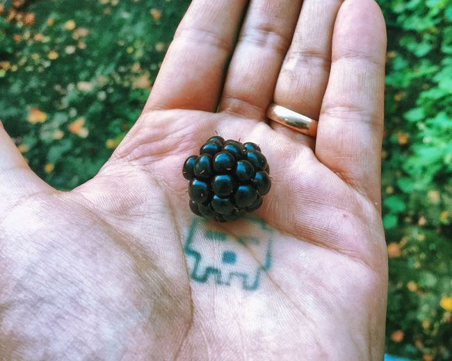 Cropped image of hand holding blackberry