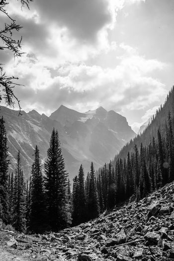 on the way down from the Banff tea house Blackandwhite Monochrome Country Rocky Mountains Tree Mountain Snow Cold Temperature Winter Forest Pine Tree Pinaceae Environment WoodLand Spruce Tree Pine Woodland Treetop Snowcapped Mountain Wilderness Area Evergreen Tree