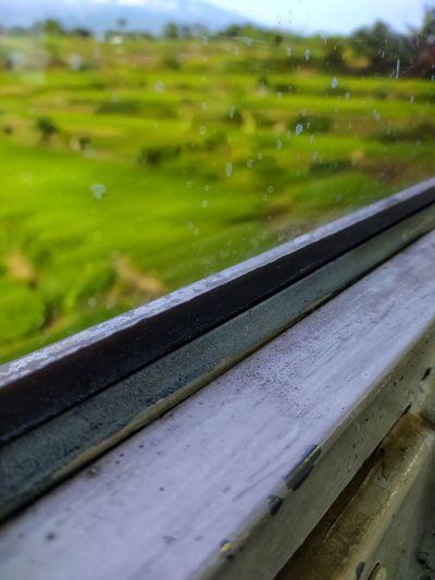 Close-up of wet window on field