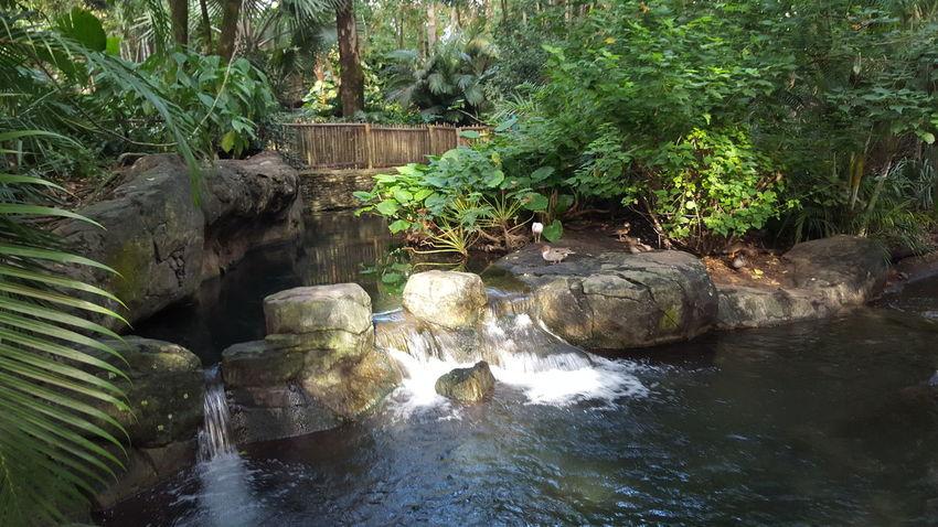 Disney Landscape DisneyWorld Jungle Waterfall