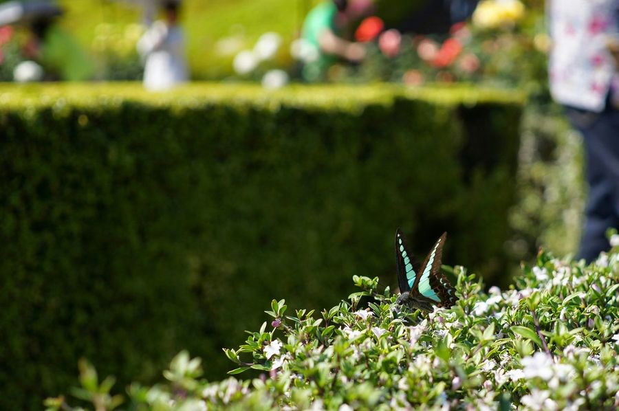 Batterfly  Enjoying The Sun Moment The Purist (no Edit, No Filter) Beautiful Day Taking Photos Getting Inspired Nature