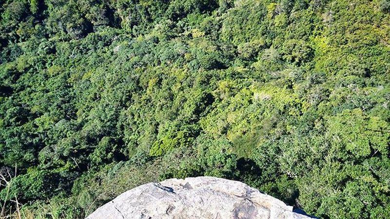 Kloof Fromwhereistand Forest Krantzkloof Kloof Gorge Canyon Instanature Green Trees Kzn Scenic Kwazulunatal