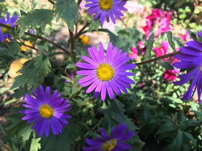 🌸🌸🌸 Flower