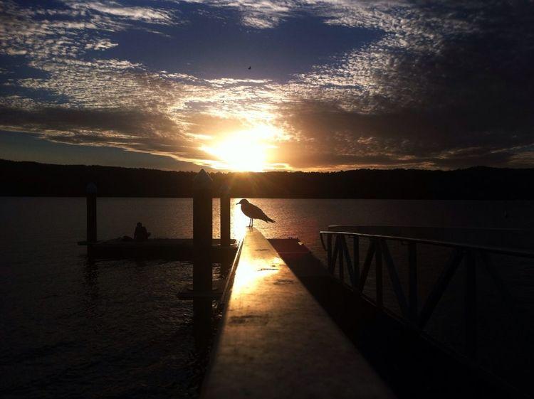 Seagulls Sleepy Time #sunset #sun #clouds #skylovers #sky #nature #beautifulinnature #naturalbeauty #photography #landscape Water_collection