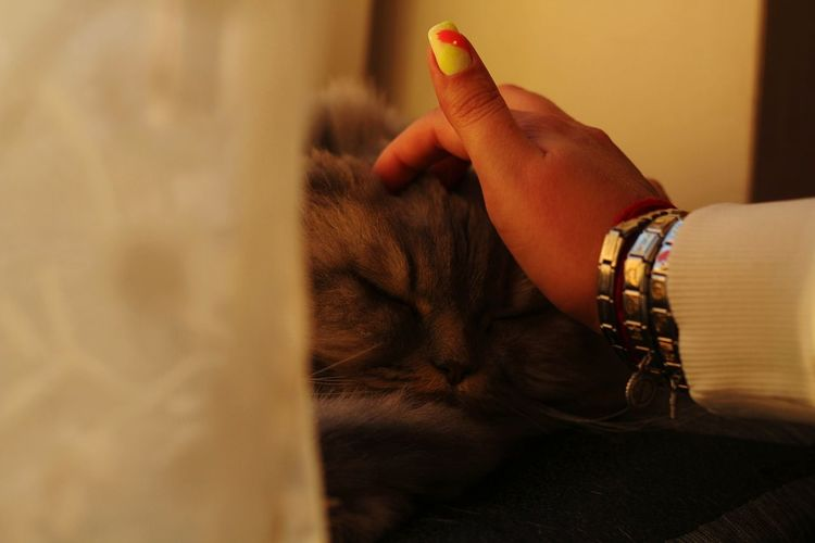 Cropped hand of woman touching cat