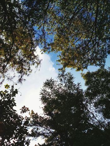 Parque  BarraFunda Saopaulo Sampa Sky Skylovers Trees Nuvens Summertime Lovely