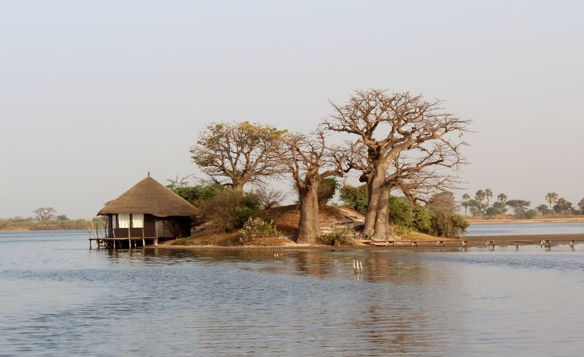 I need a new beginning there. Raconets Travel Africa Senegal Nature Escapada Viajar Experience A New Beginning Water Tree Clear Sky Stilt House Lake Hut Sky Architecture Building Exterior Built Structure Tranquility Calm Tranquil Scene Scenics