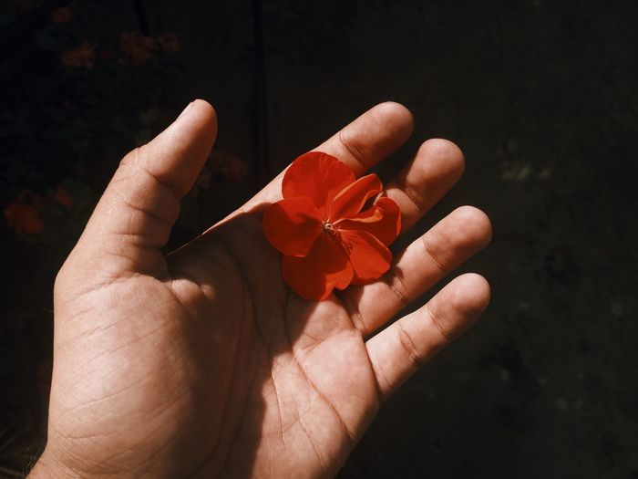 Cropped hand holding red flower