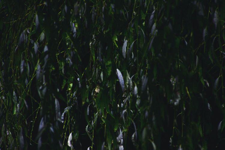 Green Green Color Leaves🌿 Leaf Bynight Tree EyeEm Ready