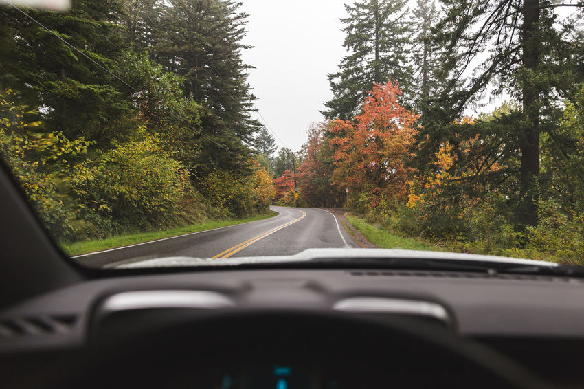 Hoyt Arboretum / Forest Park in Portland, Oregon, USA. Fall time foggy and rainy day. Autumn Car Car Interior Car Point Of View Close-up Dashboard Day Land Vehicle Mode Of Transport Nature No People Outdoors Road Sky The Way Forward Transportation Tree Vehicle Interior Windscreen Windshield