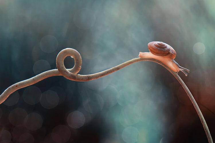 #macro #snails