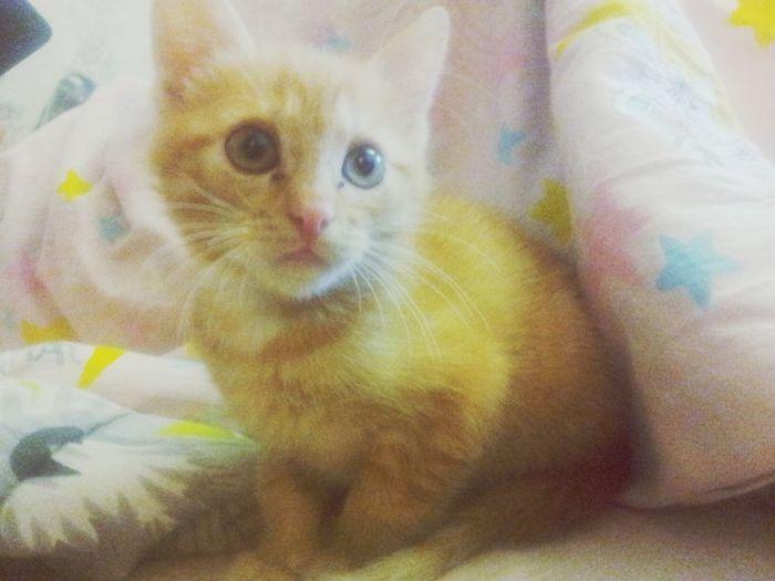 вот такие мы чудные! Cute Cat Mynewfriend Love