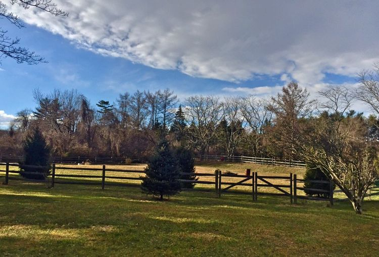 Tree Sky Cloud - Sky Growth Nature Grass Beauty In Nature Scenics No People Tranquility Field Tranquil Scene Brandywine creek Green Color Landscape
