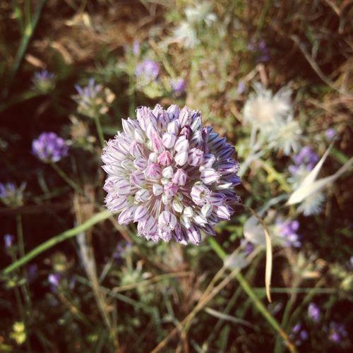 Macro Fields Purple Flowerporn