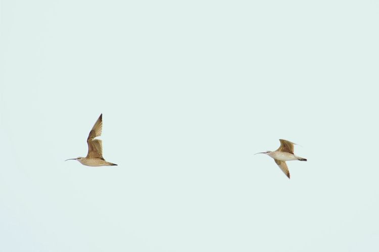 Close-Up Of Birds Flying In Sky