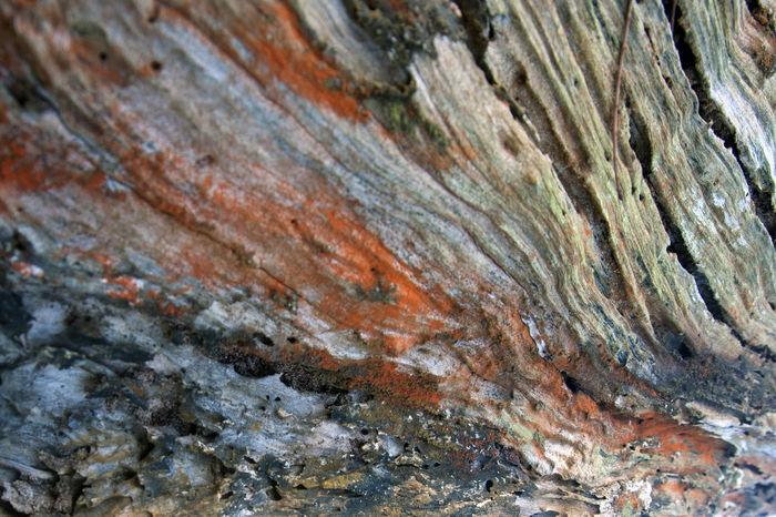 Caribbean Life Close-up Colorful Dead Branch Mold Nature Outdoors Playa Cibuco, Vega Baja Puerto Rico Rough Textured  Tree