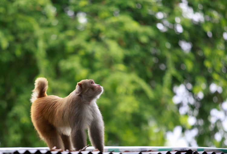 Bangladesh Nature Animal Animal Themes Animal Wildlife Canine Day Dog Domestic Domestic Animals Focus On Foreground Herbivorous Looking Mammal Monkey Nature No People One Animal Pets Plant Primate Tree Vertebrate Widlife