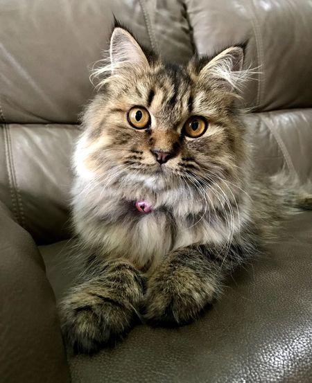 Portrait of cat sitting on sofa
