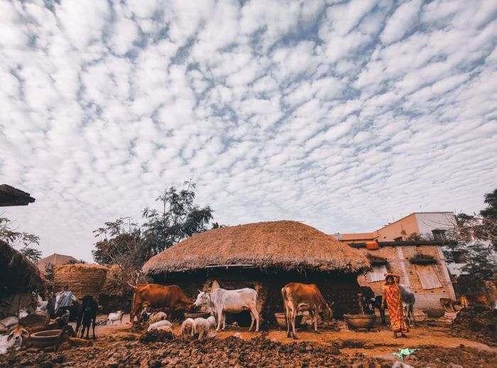 View of cows on landscape against sky