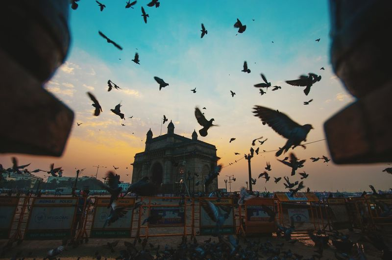 Low angle view of silhouette birds flying against gateway to india