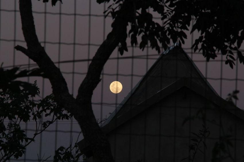 Nice effect when shooting the full moon Mapadomato Chapadadosguimaraes Fence Low Angle View Moon Night No People Sky Tree