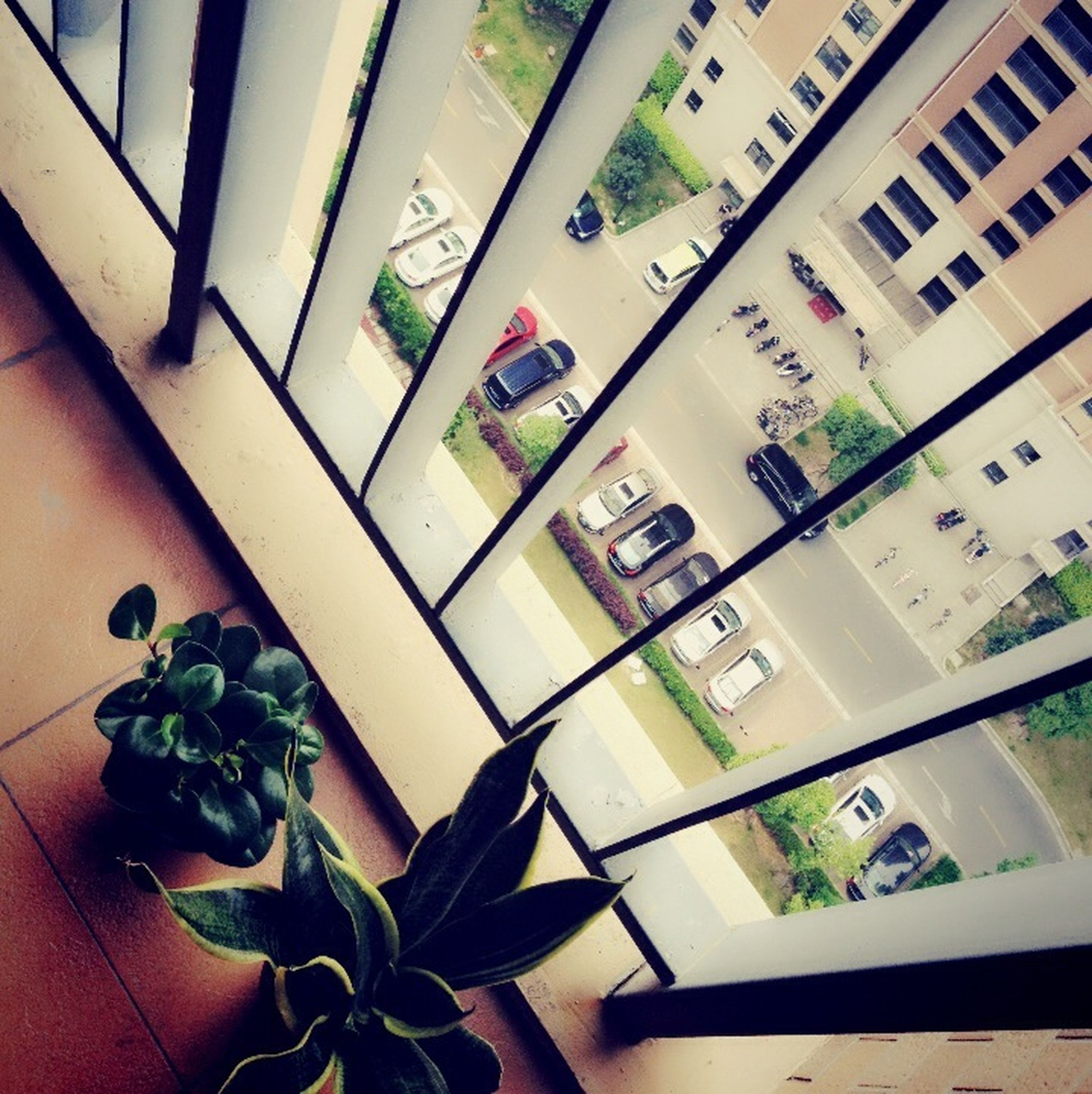 indoors, potted plant, window, high angle view, architecture, built structure, plant, house, no people, growth, building exterior, home interior, table, green color, day, sunlight, balcony, residential building, wall, door
