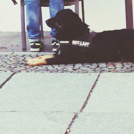 ohhh yeah My Fuckin Berlin Berlin Uncut Dog Dog Fashion