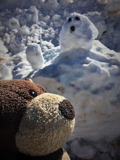 My Buddy Mr Bear.... Stuffed Toy Teddy Bear Colorado